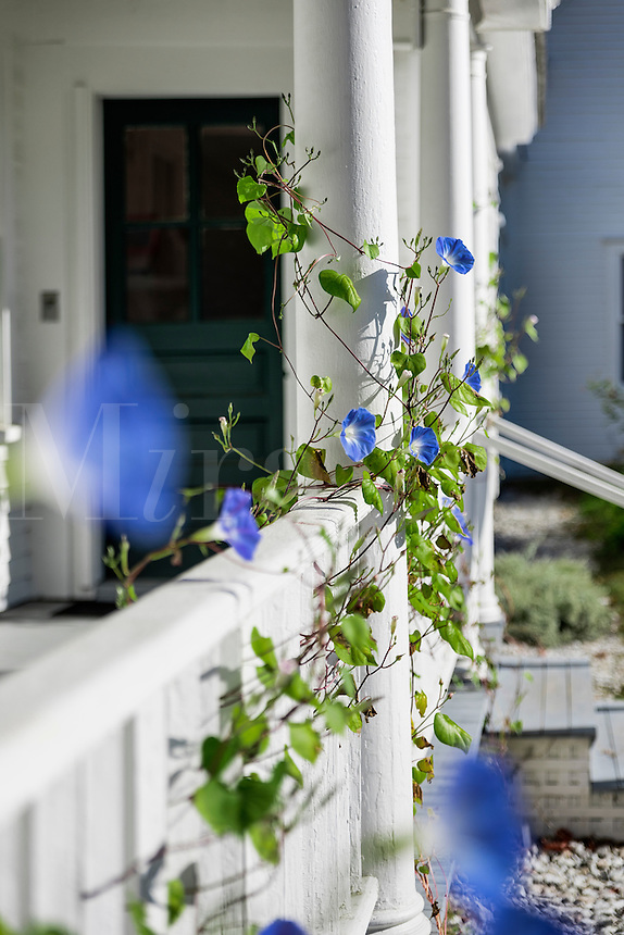 Rustic farm house porch detail with morning glory, Derry, New Hampshire, USA