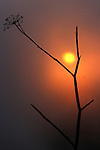 The sunsets behind a twig up in the Marin Headland, Sausalito, California.