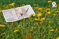Ten Euros banknote on grass (Licence this image exclusively with Getty: http://www.gettyimages.com/detail/81867355 )