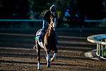 November 3, 2020: Channel Maker, trained by trainer William I. Mott, exercises in preparation for the Breeders' Cup Turf at Keeneland Racetrack in Lexington, Kentucky on November 3, 2020. Jon Durr/Eclipse Sportswire/Breeders Cup