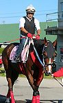 LOUISVILLE, KY - APRIL 24: Paola Queen (Flatter x Kadira, by Kafwain) goes to the track at Churchill Downs to prepare for the Kentucky Oaks. Owner Grupo 7C Racing Stable, trainer Gustavo Delgado. (Photo by Mary M. Meek/Eclipse Sportswire/Getty Images)