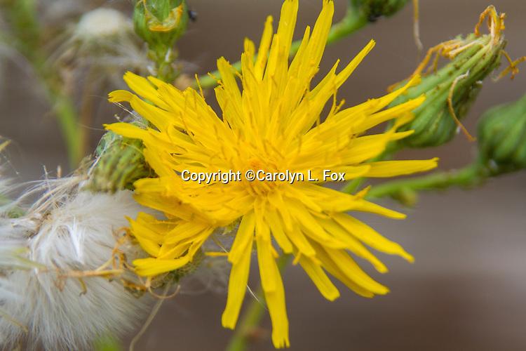Wild flowers grow in Montana.