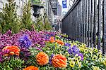 Spring garden on Beacon Hill, Boston, Massachusetts, USA