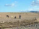 Iraq 2014    <br /> On the way and near the front line, district of Mahmur, young shepherds <br /> Irak 2014 <br /> Sur la piste, pres de la ligne de front du district de Mahmur, jeunes bergers