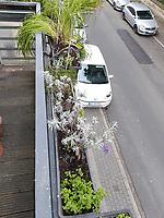 vorne: Helmkraut, hinten: zwei Lavendel<br /> <br /> Europe, Germany, Ruhr Area, Wetter<br /> <br /> Europa, Deutschland, Ruhrgebiet, Wetter<br /> <br /> [MODEL RELEASE: NO, Copyright: Vera Schimetzek, Bornstrasse 5, 58300 Wetter, Germany, phone: 0049.2335.970650, mobil: 0049.151.21220918, www.schimetzek-foto.de, schimetzek@web.de,<br /> Die Verwendung des Fotos ist honorarpflichtig. Keine Verwendung ohne Genehmigung.  Es gelten die AGB.<br /> For use the general terms and conditions are mandatory. No use without permission. The use of the image is subject to a fee.]