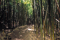 Hiking trail in the bamboo forest at the seven pools in HALEAKALA NATIONAL PARK on Maui in Hawaii