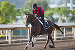 SHA TIN,HONG KONG-DECEMBER 08 : Chemical Charge,trained by Ralph Beckett,exercises in preparation for the Hong Kong Vase at Sha Tin Racecourse on December 8,2017 in Sha Tin,New Territories,Hong Kong (Photo by Kaz Ishida/Eclipse Sportswire/Getty Images)