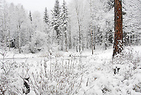 White winter landscape with one brown larch trunk.