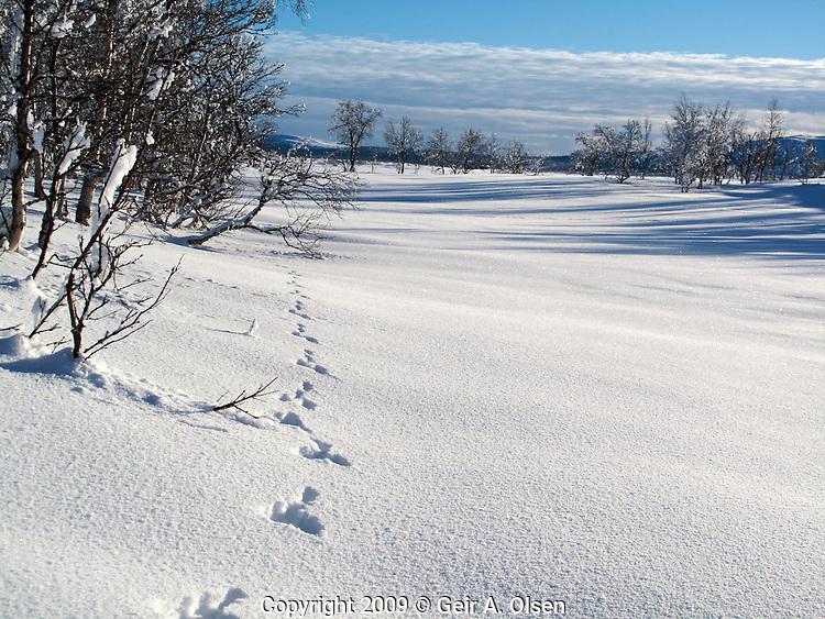Venabygdsfjell januar/februar 2009