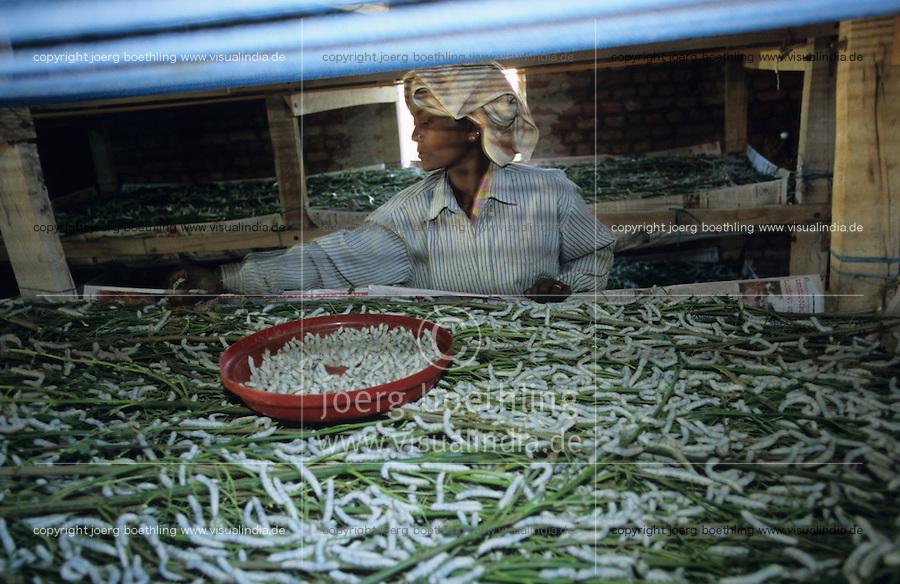 INDIA, Karnataka, natural silk production in village near Bangalore / INDIEN Karnataka Dist. Mandya , Seidenraupen Zucht in einem Dorf  bei Bangalore , Seidenraupe wird mit Blaetter des Maulbeerbaum gefuettert , aus den Seidencocoons werden Seidengarne gesponnen und zu Seidenstoffen verwebt