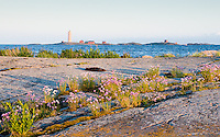 Söderskär lighthouse  in evening light from a skerry dressed with wildflowers -Southern Finland