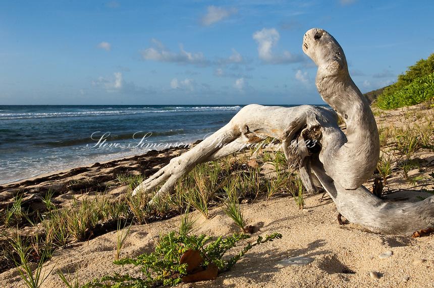Driftwood at Reef Bay beach resembling a sea serpent.Virgin Islands National Park.St John, US Virgin Islands