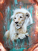 Sandi, REALISTIC ANIMALS, REALISTISCHE TIERE, ANIMALES REALISTICOS, paintings+++++copperwhitelion,USSN40,#a#, EVERYDAY ,puzzles