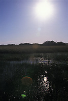 Reflection of the sun on water and grasses<br />