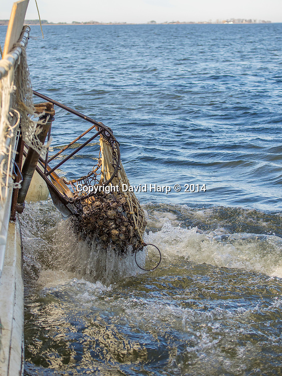 A dredge full of oysters is brought aboard.