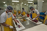 Cutting and preparing yellowfin tuna loin for packing. Nutrindo Fresfood International tuna processing plant for export market.