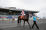 Conquest Daddyo(7)  makes his way from  the winners circle after running to victory at the Summer Stakes at Woodbine Race Course in Toronto, Canada on September 12, 2015.