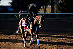 November 4, 2020: Dreamer's Disease, trained by trainer Robertino Diodoro, exercises in preparation for the Breeders' Cup Juvenile at Keeneland Racetrack in Lexington, Kentucky on November 4, 2020. Jon Durr/Eclipse Sportswire/Breeders Cup