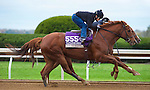 October 26, 2015: Judy The Beauty working in company in preparation for the Breeders Cup Filly and Mare Sprint. Samantha Bussanich/ESW/CSM