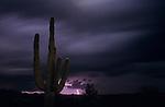 Saguaro cactus sunset at dusk with lightning Arizona State USA