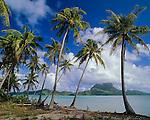 Bora Bora, French Polynesia   <br /> Coconut Palm trees (Cocos nucifera) on Moto Piti Aau frame the view of Bora Bora across the lagoon and Faaopore Bay