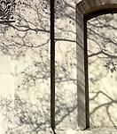 February Shadows
