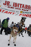 One of Travis Beal's wheel dogs is raring to go at the start line of the 2009 Junior Iditarod on Knik Lake on Saturday Februrary 28, 2009.