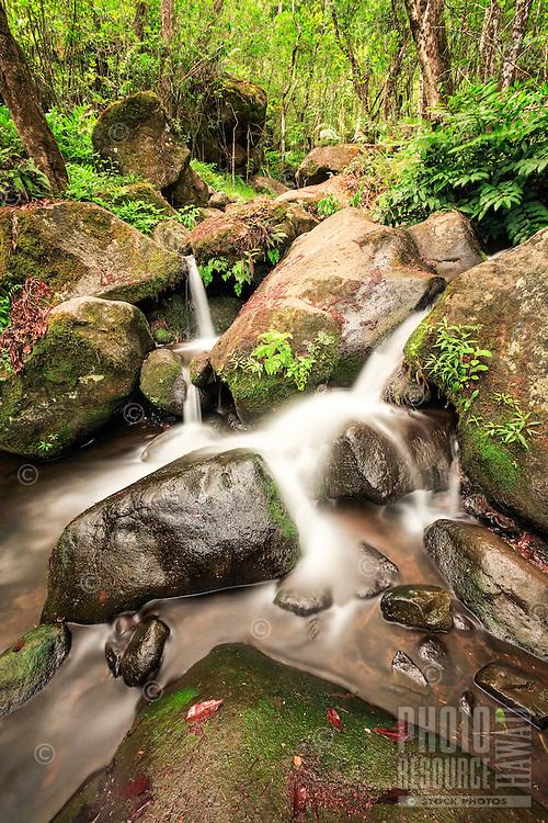 A look into the incredibly beautiful Hanakoa Valley and Hanakoa Stream, six miles in on the Kalalau Trail, Na Pali Coast, Kaua'i.