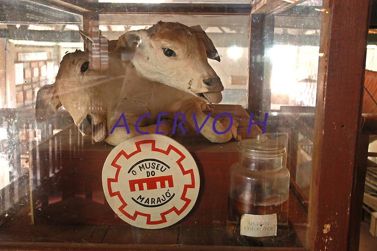 Bezerro de duas cabeças, museo do Marajó<br /> Cachoeira do Arari, Pará, Brasil.<br /> 08/05/2006<br /> Foto Paulo Santos/Interfoto