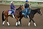 ARCADIA, CA - NOV 01: Beholder, owned by Spendthrift Farm LLC and trained by Richard E Mandella, exercises in preparation for the Breeders' Cup Longines Distaff at Santa Anita Park on November 1, 2016 in Arcadia, California. (Photo by Scott Serio/Eclipse Sportswire/Breeders Cup)