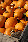 Large container of pumpkins, Zacherl's Farm Market, Route 23
