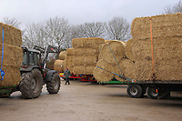 Straw on trailers for sale at a livestock market, Cheshire...Copyright John Eveson 01995 61280.j.r.eveson@btinternet.com