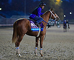 November 1, 2018 : King of Speed, trained by Jeff Bonde, trains for the Breeders' Cup Juvenile Turf at Churchill Downs on November 1, 2018 in Louisville, KY. Jessica Morgan/ESW/CSM