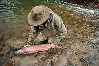 A fly angler with a trophy male steelhead (Oncorhynchus mykiss), Nass River tributary, northern British Columbia, Canada