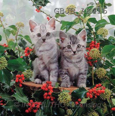 Kim, CHRISTMAS ANIMALS, photos, 2 kittens, cats, holly(GBJBAK416,#XA#) ,puzzles