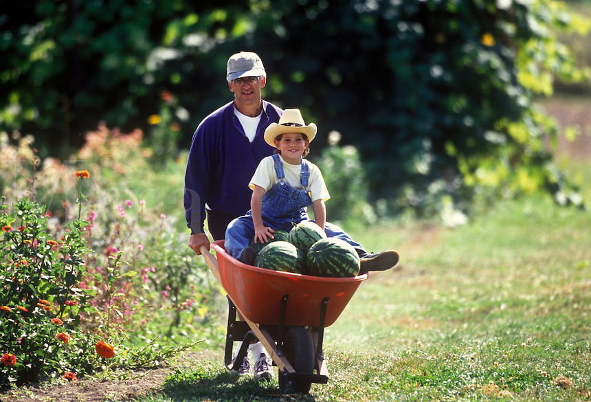 Father gives son wheelbarrow ride after watermelon harvest.