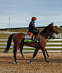 Circus Maximus, trained by trainer Aidan P. O'Brien, exercises in preparation for the Breeders' Cup Mile at Keeneland Racetrack in Lexington, Kentucky on November 5, 2020.