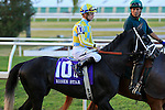 NEW ORLEANS, LA - FEBRUARY 20:<br /> Airoforce #10, ridden by Julien R Leparoux in the Risen Star Stakes post parade for the Louisiana Derby Preview Race Day at Fairgrounds Race Course on February 20,2016 in New Orleans, Louisiana. (Photo by Steve Dalmado/Eclipse Sportswire/Getty Images)