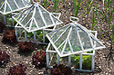 Traditional glass lantern cloches, late May.
