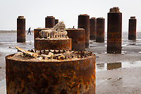 A man searches for shells by the remains of an unidentified structure, near the megacity of Tianjin in north-east China. Major infrastructure that supports the daily functioning of the city is often the first impacted as storm surges hit and sea levels rise. The city also has problems with land subsidence which exacerbates the problems faced. 2019
