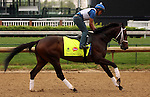 LOUISVILLE, KY - APRIL 23: Dazzling Gem (Misremembered x Dazzling, by Vindication) jogs on the track at Churchill Downs in preparation for the Kentucky Derby. Owner Steve Landers Racing LLC, trainer Brad H. Cox. (Photo by Mary M. Meek/Eclipse Sportswire/Getty Images)