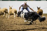 2018 Minnesota State Stock Dog Trials