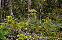 USA/Etats-Unis/Alaska/Env de Petersburg : La forêt