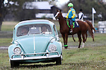 """A """"Bug"""" was leading the horses to the starting line during the Genesee Valley Hunt Races held at The Nations Farm in Geneseo, NY."""