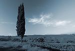 Europe, ITA, Italy, Tuscany, Pienza, Landscape, Typical  Cypress, Cloud....[ For each utilisation of my images my General Terms and Conditions are mandatory. Usage only against use message and proof. Download of my General Terms and Conditions under http://www.image-box.com or ask for sending. A clearance before usage is necessary...Material is subject to royalties. Each utilisation of my images is subject to a fee in accordance to the present valid MFM-List...Contact | archive@image-box.com | www.image-box.com ]