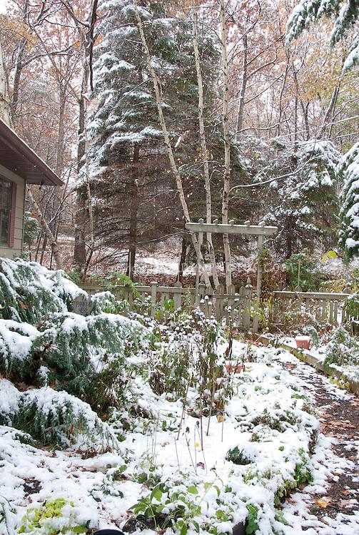 Garden in winter snow, with picket fence, birch trees, evergreens, garden plants, beds, trellis arbor, shrubs, pathway