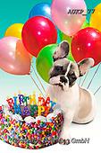 Samantha, ANIMALS, REALISTISCHE TIERE, ANIMALES REALISTICOS, funny photos, photos+++++,AUKP77,#a#, EVERYDAY ,party