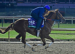 November 1, 2018 : Sadler's Joy, trained by Tom Albertrani, trains for the Breeders' Cup Turf at Churchill Downs on November 1, 2018 in Louisville, KY. Jessica Morgan/ESW/CSM