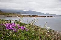 Wellington, New Zealand.  Coastal Shoreline and Wildflowers.