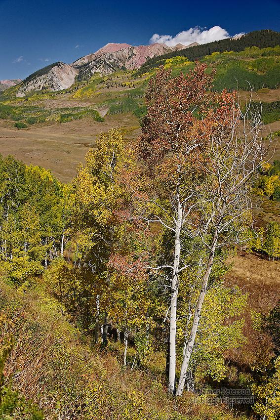 Aspens And Avery Peak, Colorado